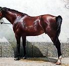 Castellanos1.jpg