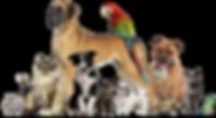 Pawsitively Comfy Pet Sitting Services Manhattan, KS