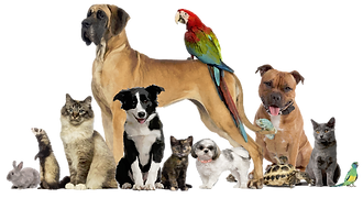 Pawsitively Comfy Pet Sitting Services Manhattan, KS