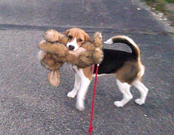 Dog Walking Manhattan, KS
