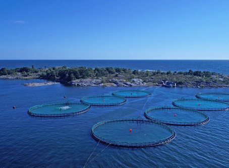 Bladderwrack and fish farming combined, a future win-win?