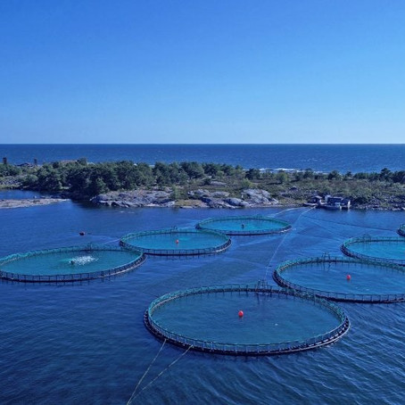 Bladderwrack and fish farming combined, a future win-win?