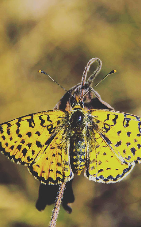 Canva - Yellow and Black Butterfly.jpg