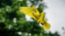 Canva - Flying Yellow Bird.jpg