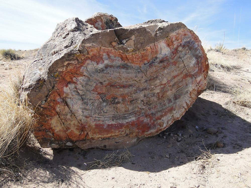 Petrified Wood in Arizona