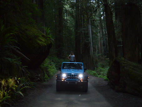 Exploring the Redwoods