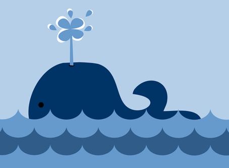"""Desafio da Baleia Azul - Por que tantos jovens estão participando desse """"jogo""""?"""