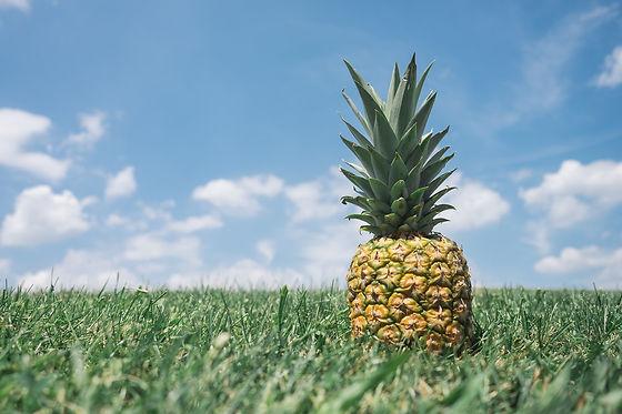 pineapple-867245_1920.jpg