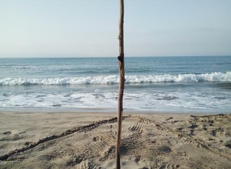 L'été sans-fin par Damien Gault
