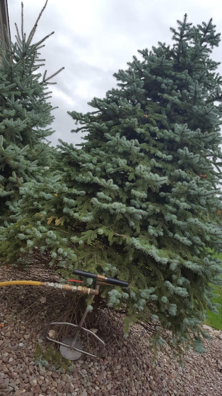 Tree being treated