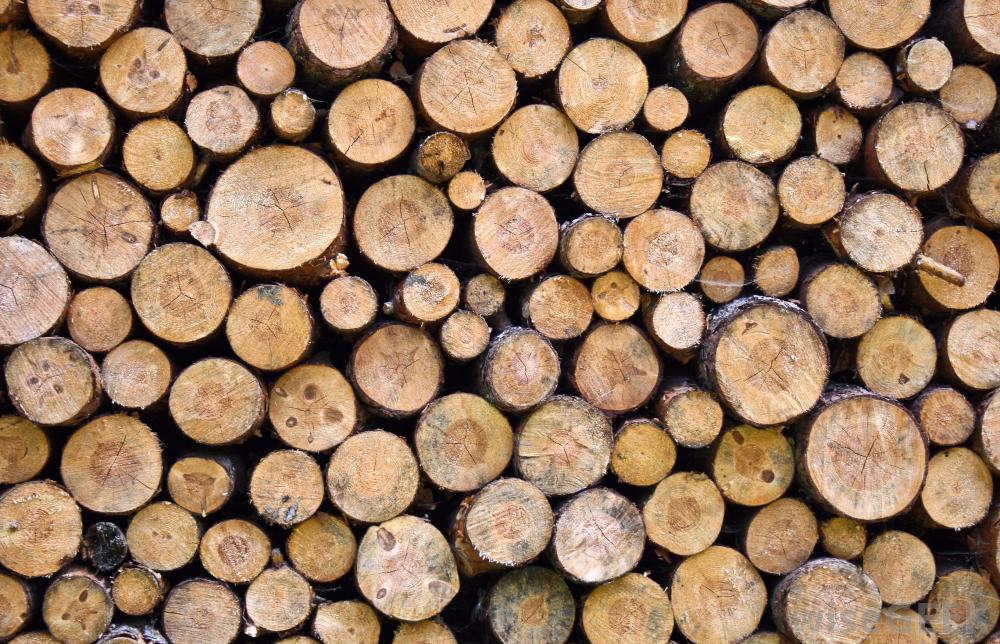 firewood-pile.jpg