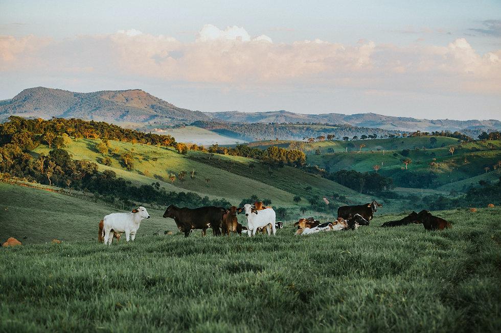 herd-of-cattle-in-daytime-841303.jpg