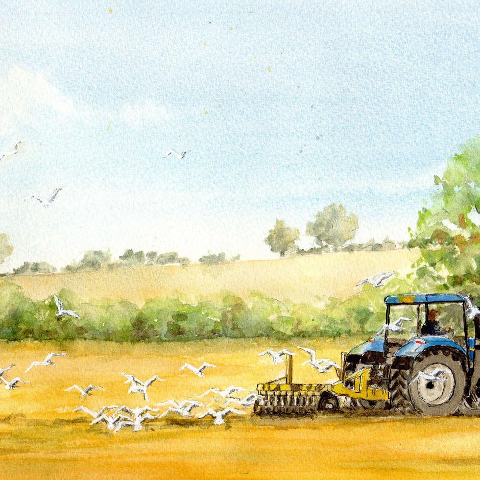 One man and tractor/Helen Rubinstein