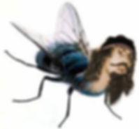 Starbrookfly_edited.jpg