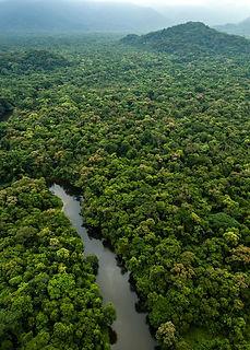 selva-amazonica.jpg