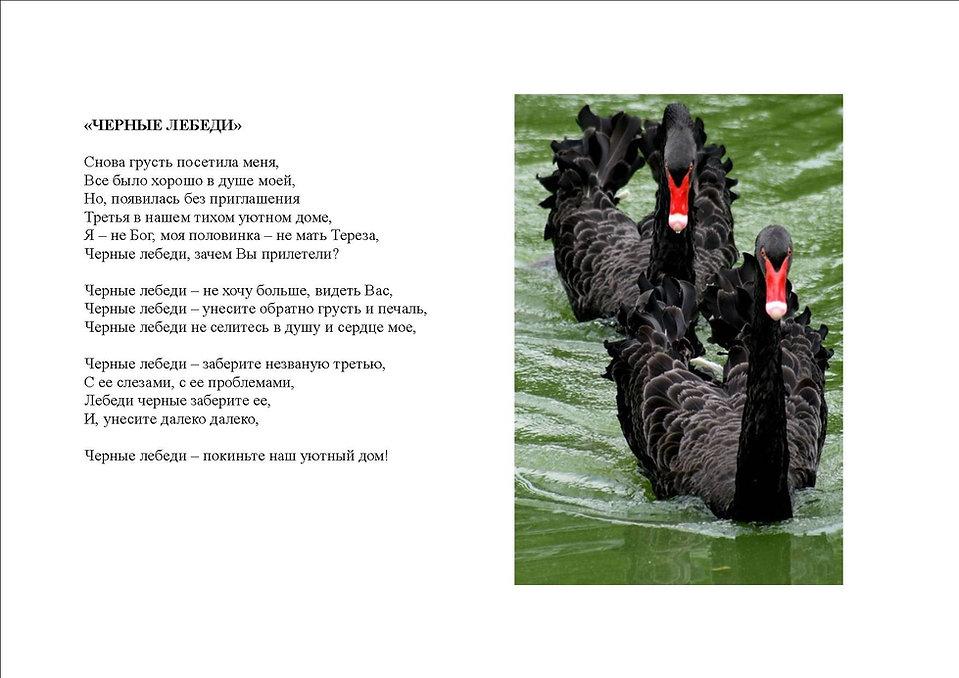 Черные лебеди.jpg