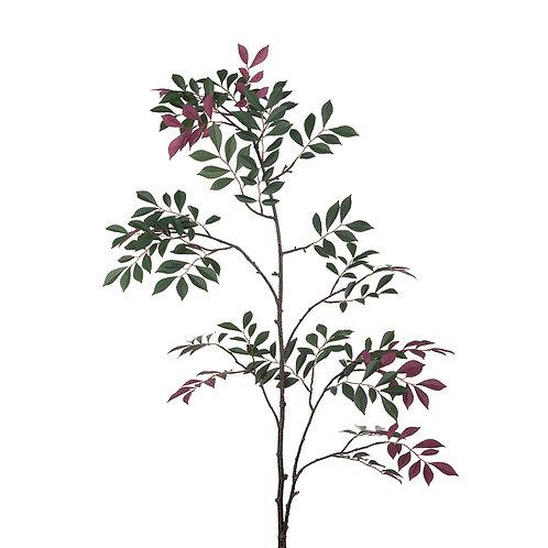 Mr Plant Japansk Rønn