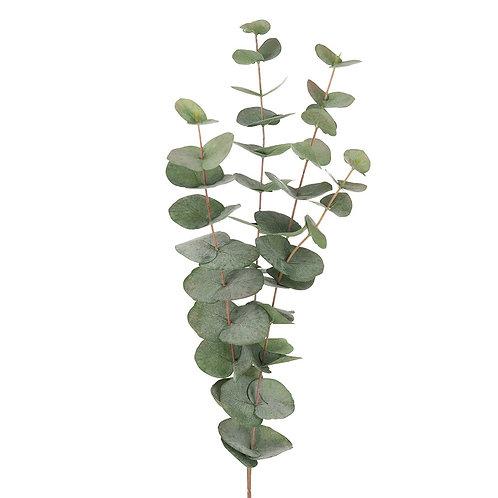 Mr Plant Eucalyptus