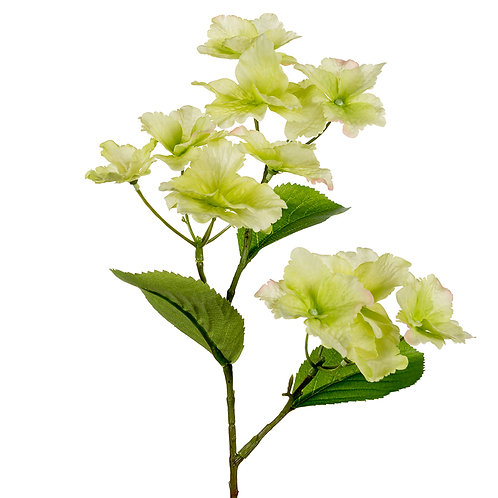 Mr Plant Hortensia