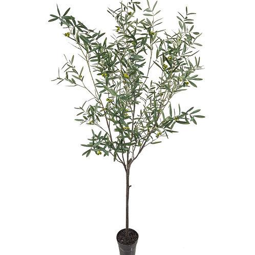 Mr Plant Olivtre