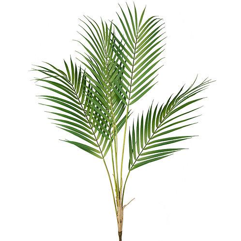 Mr Plant Bergspalm