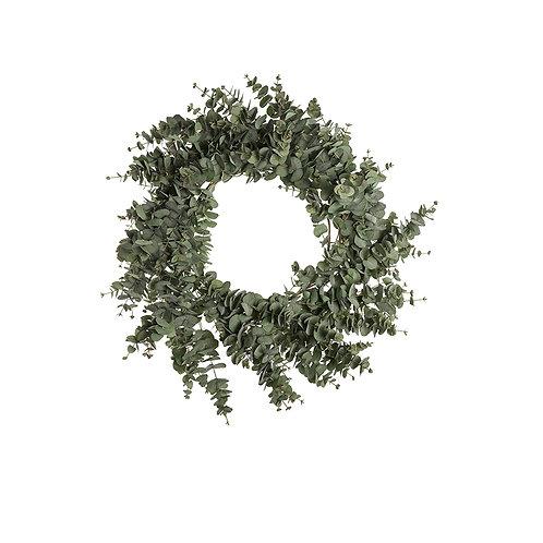 Mr Plant Krans Eucalyptus