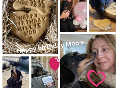 Millie Moo is 10!