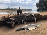 ZAMBIA & BOTSWANA HUNTING