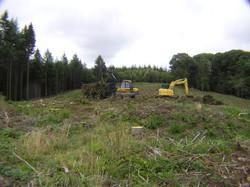 Tree felling 2015