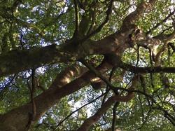 Bonded trees