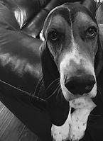 Dog pic 2.jpg