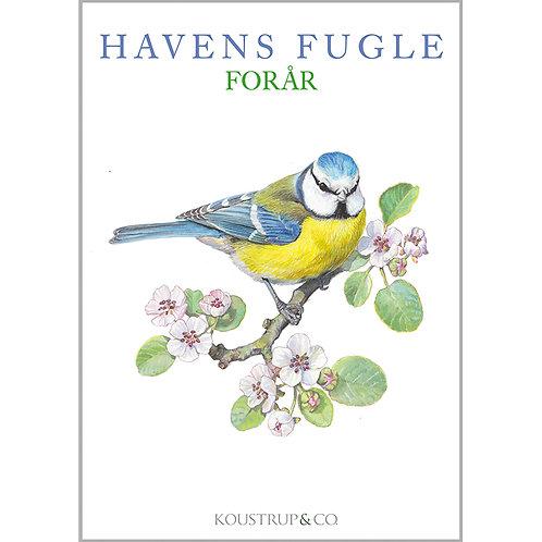 Spring Garden Birds Card Folder w/8 Note Cards