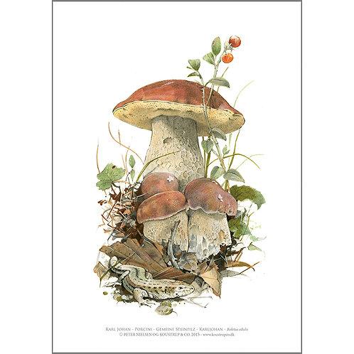 Karl Johan Fungi Art Print