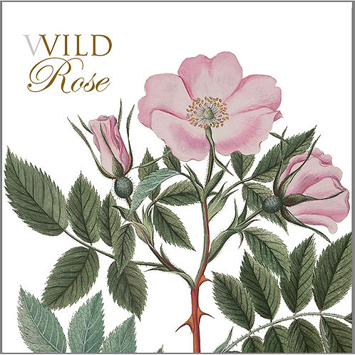 Wild Rose Square Card Folder w/8 Note Cards