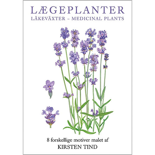Medicinal Plants Card Folder w/8 Note Cards