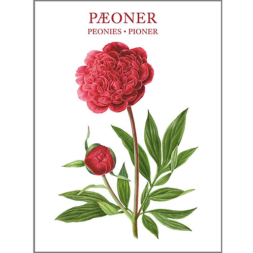 Peonies Card Folder w/8 Note Cards