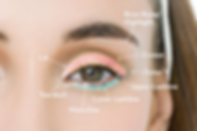 gh-how-to-apply-eyeshadow-indexartboard-
