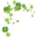 kisspng-four-leaf-clover-xiaoshu-clover-