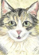 Cat painting pet portraits pastel journey