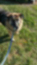 Dog Walking, Claymont, DE