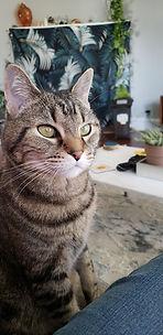 Wilmington Delaware, cat sitting, cat sitter, cat care, kitten care