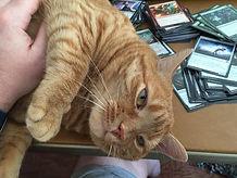 Pet sitting, Wilmington, Delaware