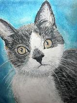Cat painting pet photography pastel journey
