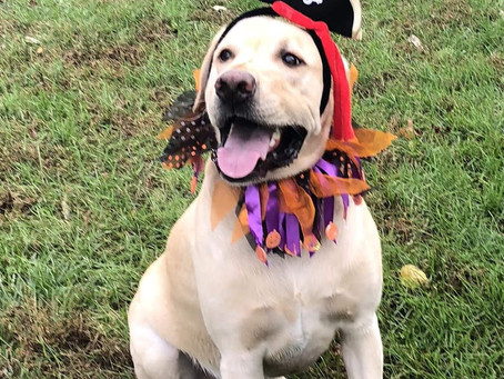Keep Halloween Fun for You and Your Pets