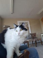 Cat Sitter, Wilmington, Delaware, kitten, care