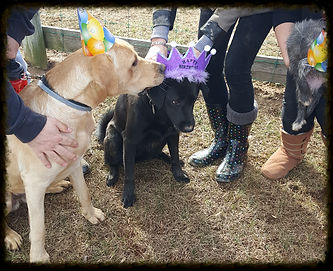 Delaware dog walkers