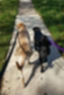 Delaware dog walking, pet sitting, boarding