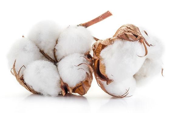 Canva - Fluffy cotton ball of cotton pla