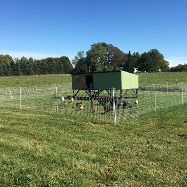 Grass Fed Beef, Erie Pennsylvania