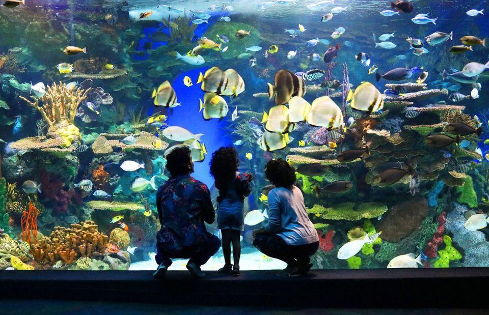 Ripleys aquarium מאת חוה
